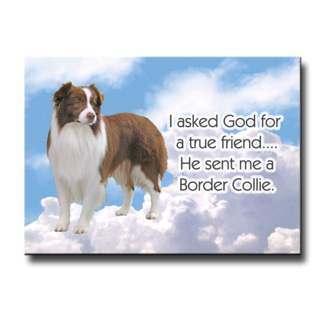 BORDER COLLIE Wanted Poster FRIDGE MAGNET No 2 R/&W