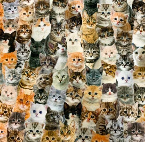 Baumwollstoff ✓Halbpanama ✓Digitaldruck ✓Fauna ✓Süße Katzen