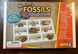 Educational-Fossil-Collection-Kids-Brachiopod-Ammonite-Bryozoa-Gastropod-Crinoid