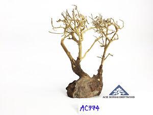 Ac774 Fancy Colours -size Mini Forceful Aquarium Bonsai Driftwood Great For Moss Tree Shrimp Fish A++