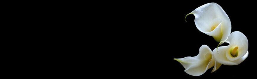 lilliesintheattic