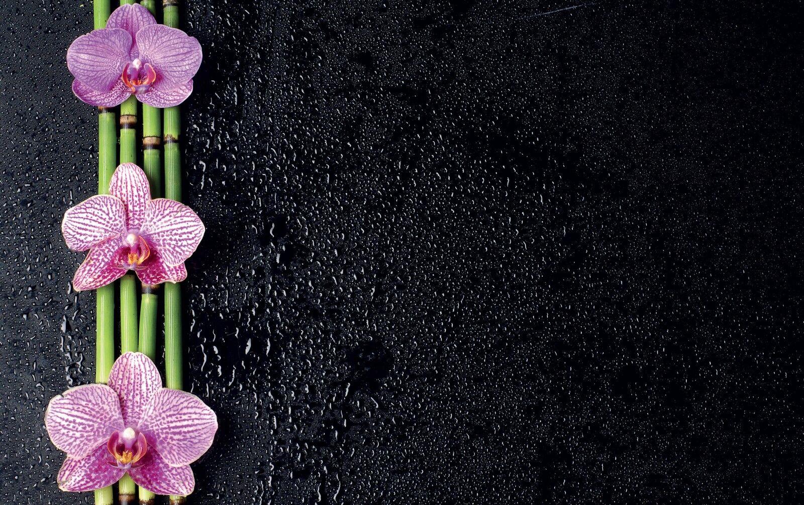 Affiche poster fleurs réf 41 ( ( ( 3 dimensions, papier mat ou papier photo) 9dc9ca