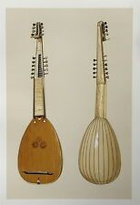 Theorbo  Musical Instrument Chromolithograph 1888