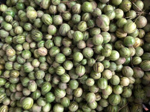 Tzimbalo Mini Pepino 20 Samen Solanum caripense exotische Früchte