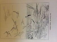 m3e ephemera book plate roland green  birds common terns