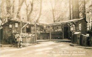 1930s Marin County Shop Woods Muir Monument RPPC Photo Postcard 166