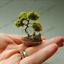50-Pcs-Graines-Miniature-PIN-plantes-Japonais-en-pot-Pin-Bonsai-Jardin-NOUVEAU-T miniature 1