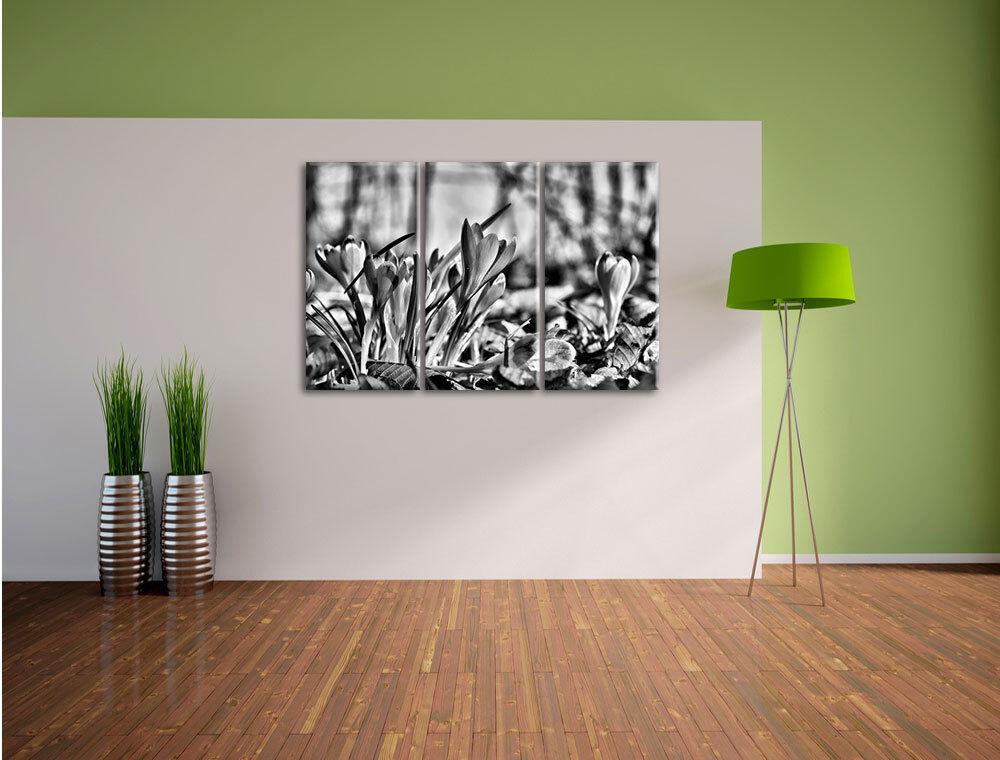 Esotiche krokusse Viola 3-Divisorio Tela Decorazione stampa d'arte d'arte d'arte 98209e