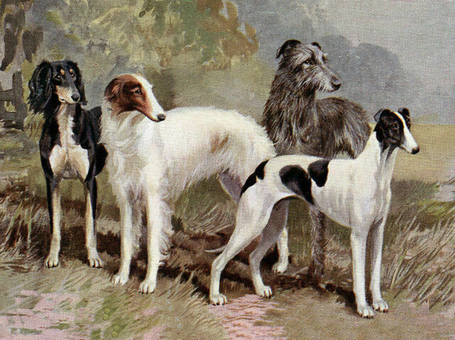 DEERHOUND CHARMING DOG GREETINGS NOTE CARD TWO BEAUTIFUL DOGS AND LADY