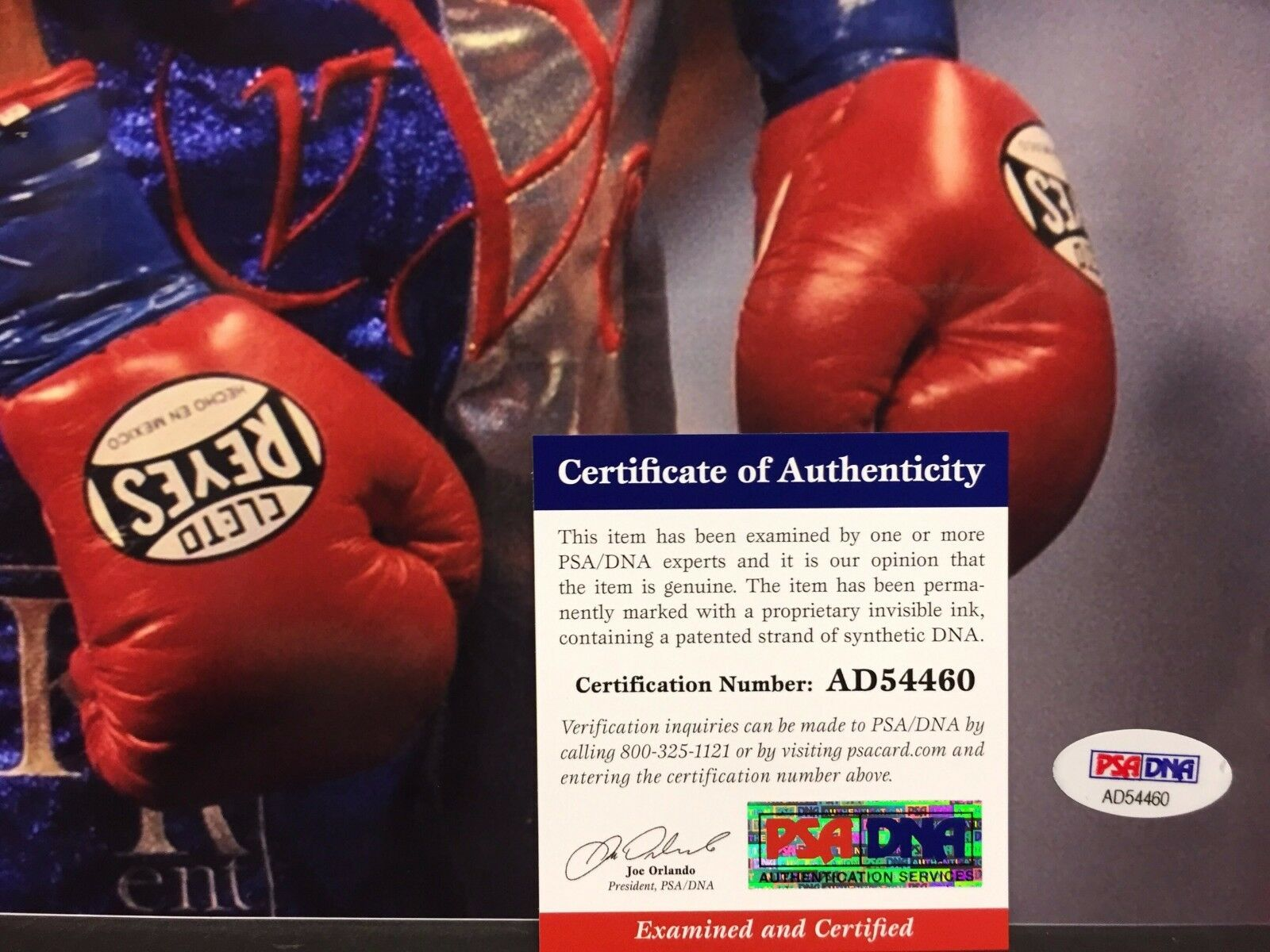 Victor Ortiz Signed 12x18 Boxing Photo *Cleto Reyes PSA AD54460