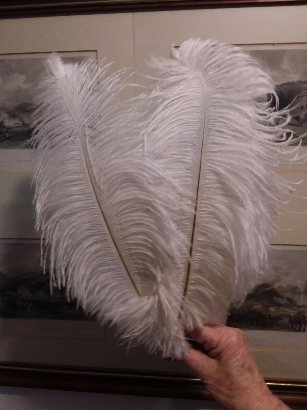 100 bleached Weiß first grade drabs ostrich feather 35mm (14 )