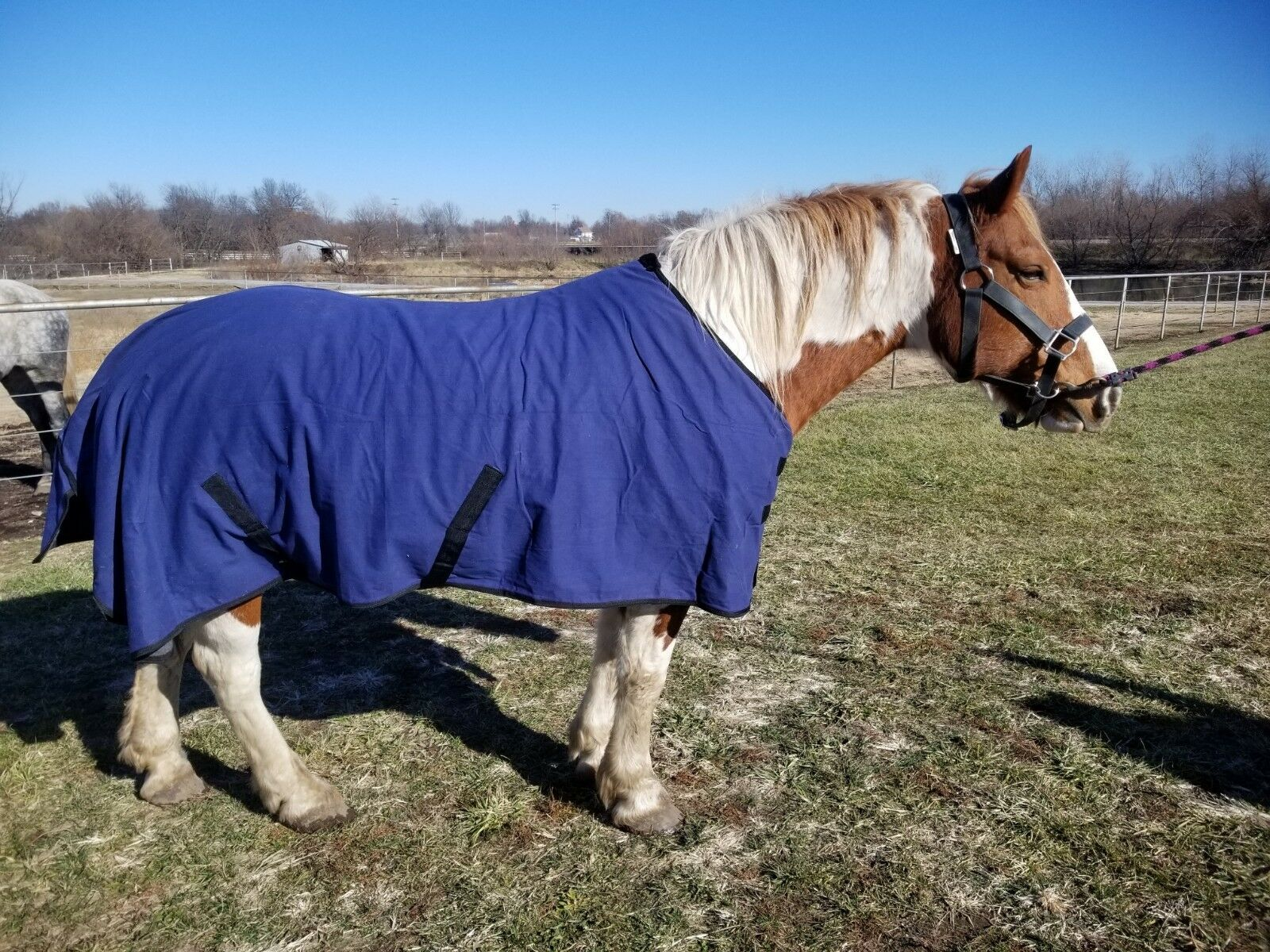 SALE Draft horse 90  96  100  water-repellent canvas wool blanket insulation