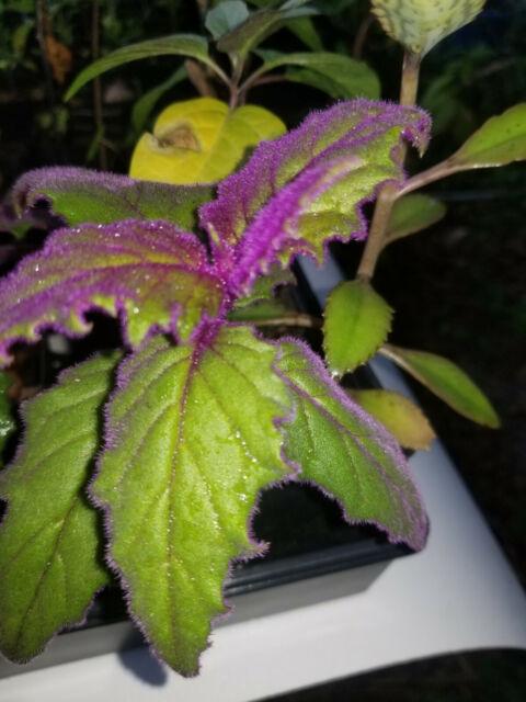 Leaf Cr House Plant on 8 leaf house plant, 3 leaf outdoor plant, 5 leaf house plant, 3 leaf plant identification,