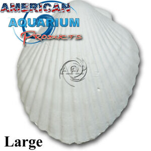 Original-AAP-Wonder-Shell-Giant-Fresh-NOT-Clearance-Product-Authorized-Seller