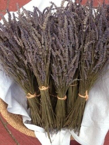5 Bundles Beautiful Dried Lavender Great Gift for wedding,birthday /& Anniversary