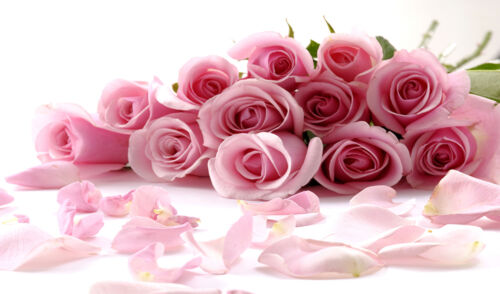 """LARGE PINK ROSES CANVAS PICTURE WALL ART A1 34/"""" X 20/"""""""