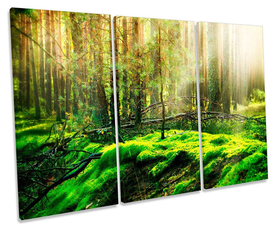Grün Forest Landscape Misty Picture TREBLE CANVAS WALL ART Print