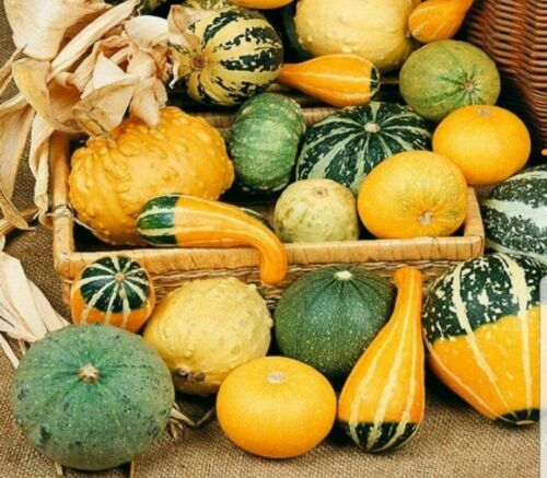 5g Ornamental gourds Mix Of Small Fruits Seeds