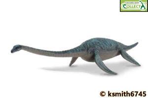 CollectA DOLICHORHYNCHOPS toy Prehistoric sea animal Dinosaur nessy NEW