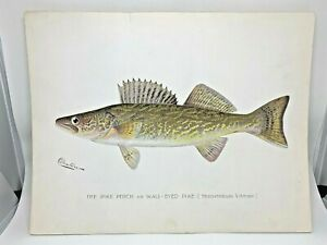 Original-Antique-Denton-Fish-Print-Walleye-Pike-Perch