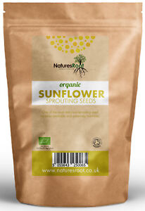 Organic-Sunflower-Sprouting-Seeds-Superfood-BEST-TASTING-Microgreen-Sprouts