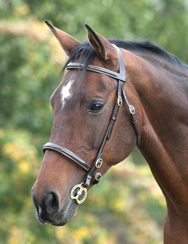 Shires Blenheim Inhand Bridle Cob size with Horseshoe Stallion  Bradoon size 5   outlet