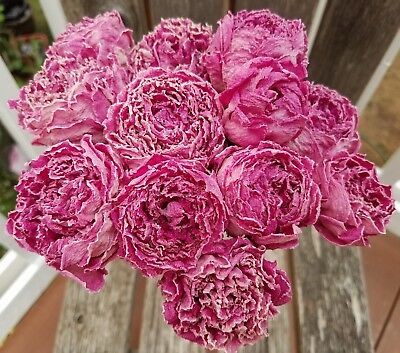 12 Dried Peony Flowers assorted Light Dark Creamy Pink Peonies Weddings Bouquets
