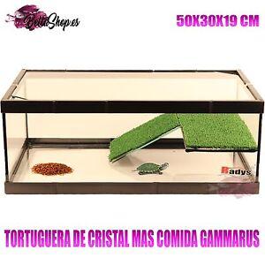 Tortugueras de cristal para tortugas tortugueras cristal for Peceras para tortugas