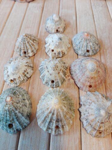 10 Natural sea Shell beads top drilled hole Beach nautical coast jewellery craft