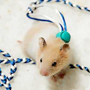 New hamster leash lead adjustable pet rat mouse guinea pig squirrel image is loading new hamster leash lead adjustable pet rat mouse publicscrutiny Image collections