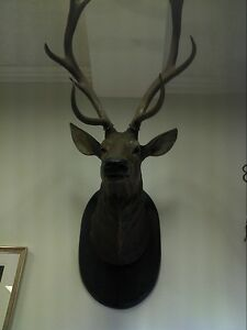Antique-Black-Forest-carved-wood-wall-mounted-deer-head