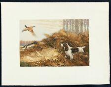 Reuben Ward Binks Vintage 1934 Aquatint English Setter Dog & Pheasant The Rise