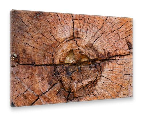 Holzquerschnitt Baum Holz Natur Querschnitt Muster Postereck Leinwand 0506