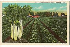 "CELERY FIELDS Kalamazoo Michigan MI Postcard ""The Celery City"" UNUSED FREE SHIP"