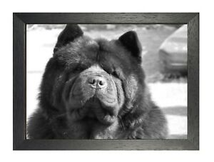 Chow-Chow-2-Poster-Black-and-White-Picture-Dog-Puppy-Family-Friend-Photo-Print