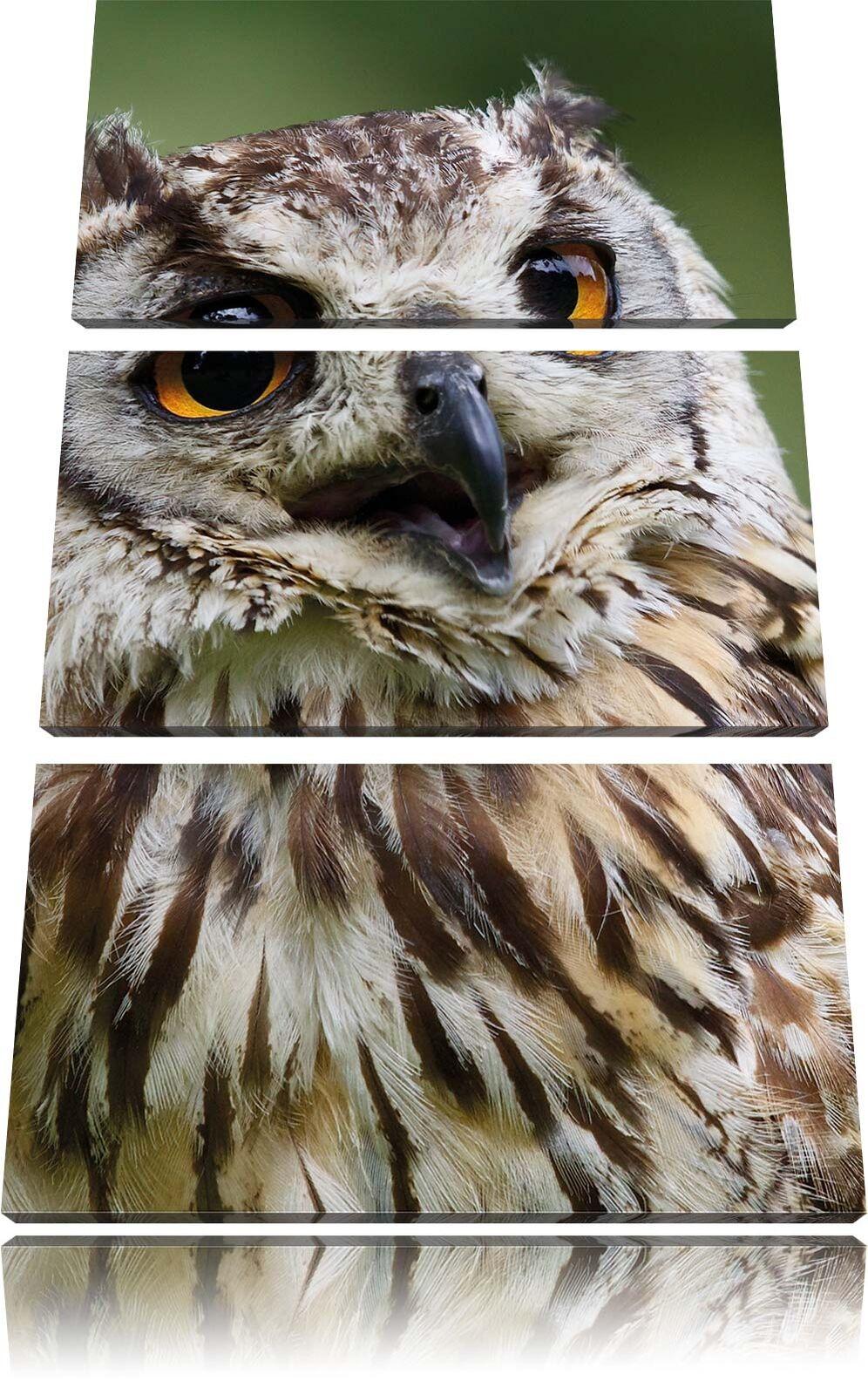 Estremamente stanca Foresta Gufo 3-Divisorio 3-Divisorio 3-Divisorio Tela Decorazione stampa d'arte 85ef2f