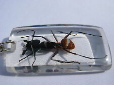 Echtes exotisches Insekt als Schlüsselanhänger - neu  einmalig und selten    06