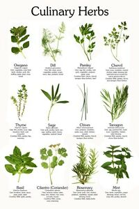 Details about Herbs Herbal Medicines Herb Garden CD 29 Books Culinary Herbs  Medicinal