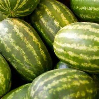 50 Seeds Kleckley Sweet  Watermelon   new seeds for 2014 Non-GMO Heirloom