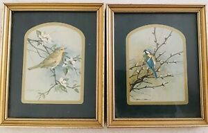 vintage-BASIL-EDE-Bird-prints-framed-8-by-6-5-each