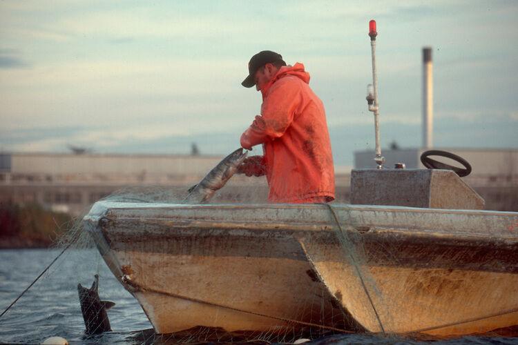 X-Large filets maillants, fine Mono, la pêche maritime, 100 m Long x 4.5 Ft (environ 1.37 m) de profondeur, truquées, nouveau