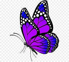 beautiful butterfly 10