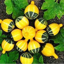 Original Package 2 Ornamental Mini Bottle Gourd Seeds Lagenaria Siceraria B105