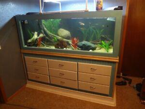 Build-This-Beautiful-8-039-Long-325-Gallon-Custom-Aquarium-For-300