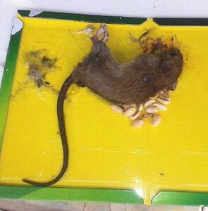 2017 New Sticky Glue Mice Traps Board Mouse Rat Safe