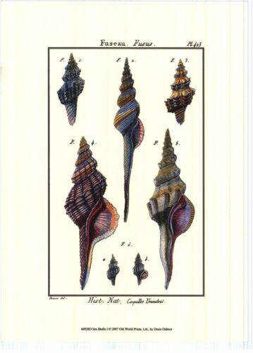 2 Denis Diderot Sea Shell Shells Art Print Posters Beautiful Frame It H Stock