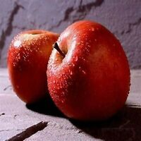 Macintosh Apple Fragrance Oil Candle/soap Making Supplies Free Shipping