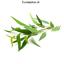 Prima-aceites-esenciales-aromaterapia-natural-puro-10ML-sentido-del-humor-mejorar-la-curacion miniatura 26