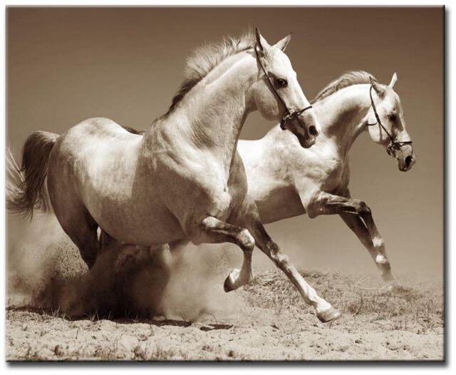 White Horses Sepia 60x40cm Large wall art canvas print artwork framed home