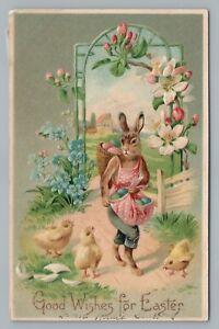 Dressed-Rabbit-w-Eggs-Rare-Fantasy-Easter-PC-Embossed-Chicks-German-306-1910s